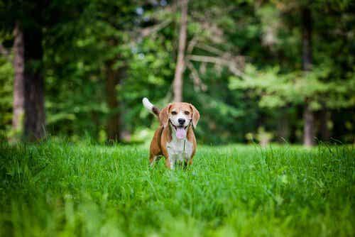 Einige Hunde haben ein besonderes hohes Energiepotenzial