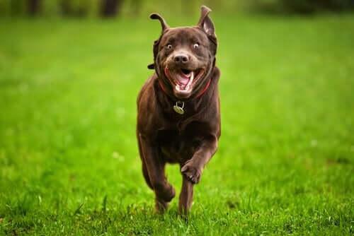 Was kannst du tun, wenn dein Hund hyperaktiv ist?