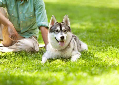 Der Hund - der beste Freund des Menschen