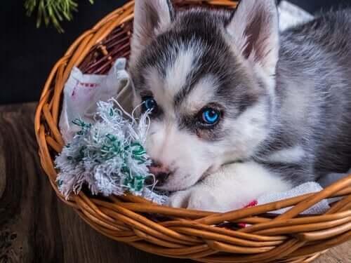 Hundebett reinigen: 5 Tipps und Tricks