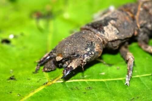 Unheimlich aussehende Insekten, die harmlos sind