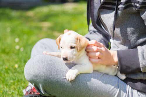 Die ersten Tage können für einen adoptierten Hund und auch für dessen Besitzer etwas stressig sein