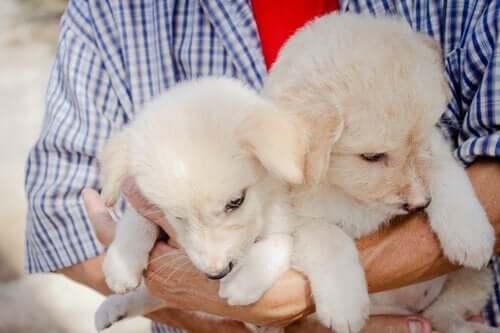 12 Tipps, um dich auf deinen Adoptivhund vorzubereiten