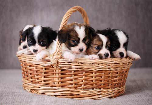 Du kannst einige Vorbereitungen treffen, um die Ankunft deines neuen Hundes so angenehm wie möglich für ihn zu gestalten