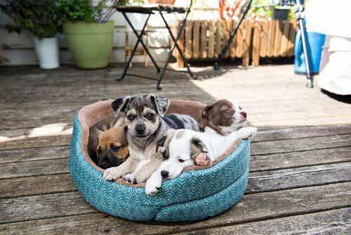 Die Reinigung des Hundebettes umfasst alle Teile des Bettes