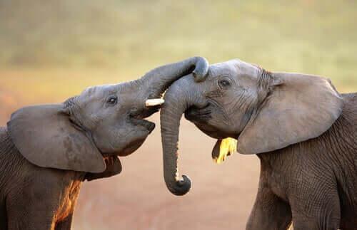 Können Tiere Emotionen empfinden?