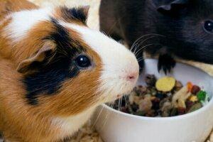 Jede Tierart ernährt sich anders