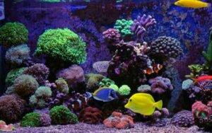 Meerwasseraquarium - Fische