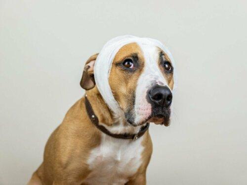 Schlaganfall bei Hunden: Ursachen, Symptome und Behandlung