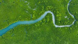 In der Phase der Stabilisierung erreicht das Ökosystem eine große Artenvielfalt