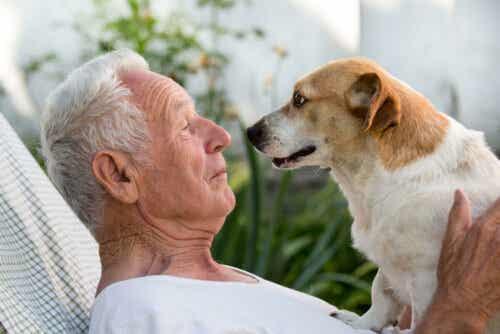 Wenn ein Hund seinen Besitzer mit seinem Blick fixiert, versucht er, ihn zu verstehen