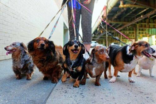 Warum du mit deinem Hund täglich spazieren gehen solltest: 5 Gründe