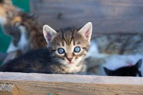 9 Gründe, warum du eine Katze adoptieren solltest