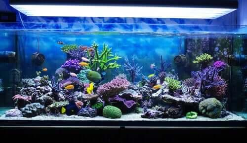 Meerwasseraquarium: Anleitung zur Pflege und Wartung