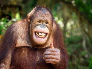 Spielen unter jungen Individuen ist Teil dessen, was wir bei Tieren als Sinn für Humor bezeichnen könnten