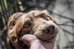 Bei senilen Hunden treten einige Veränderungen in ihrem Verhalten auf