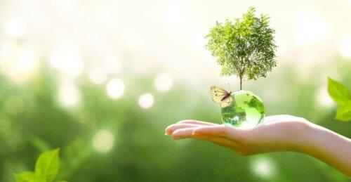 Ökologische Nachfolge: Was ist das?