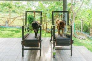 Körperliche Bewegung kann deinem Hund helfen, überschüssige Pfunde zu verlieren