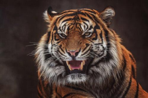 8 vom Aussterben bedrohte Säugetiere