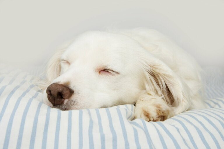 Botulismus bei Hunden: Merkmale, Ursachen und Behandlung