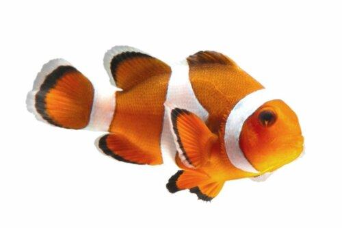 14 vom Aussterben bedrohte Fischarten