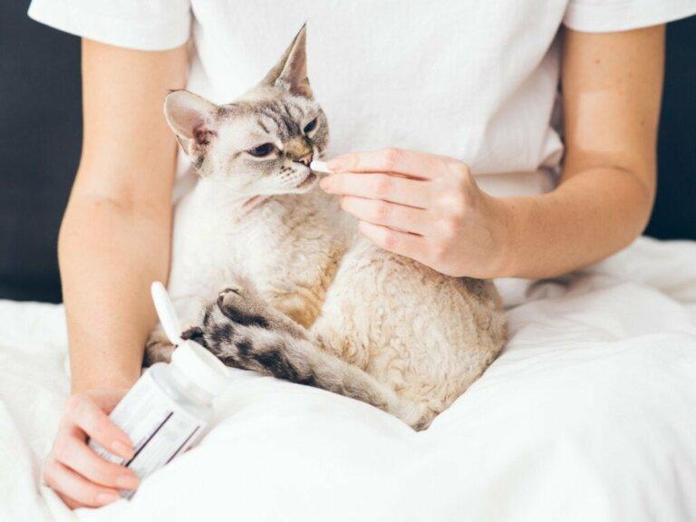 Buprenorphin für Katzen: Dosierung und Nebenwirkungen