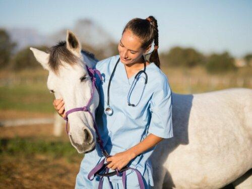 Pferdeinfluenza: Ursachen, Symptome und Behandlung