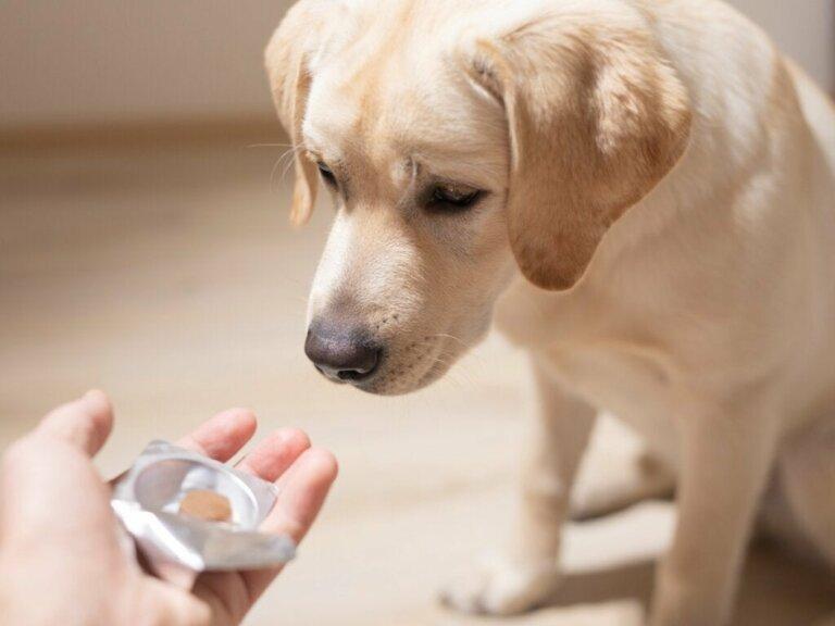 Sucralfat für Hunde: Dosierung und Kontraindikationen