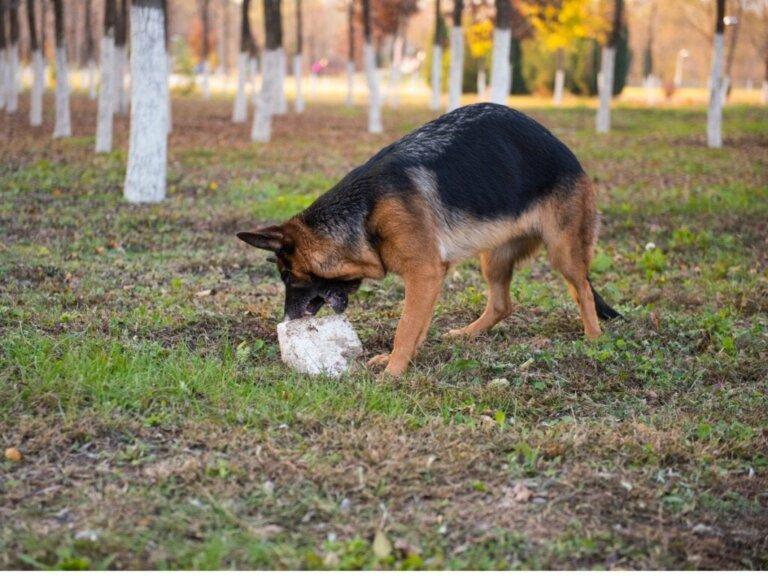 Dein Hund frisst Steine? 8 mögliche Gründe für dieses Verhalten