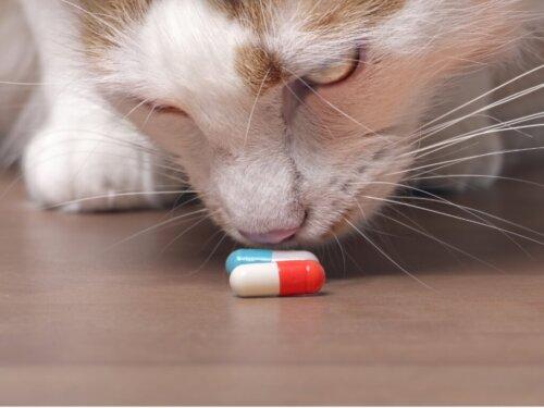 Onsior für Katzen: Dosierung und Nebenwirkungen