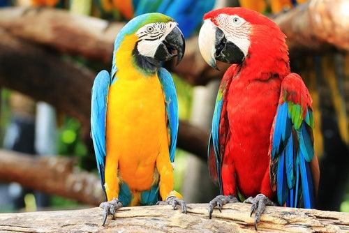 Warum Papageien ideale Gefährten sind