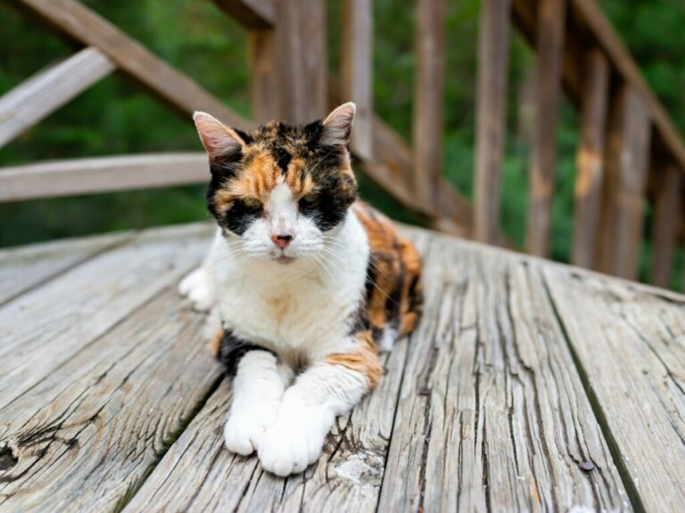 Gewichtsverlust bei Katzen: Hauptursachen und Behandlung