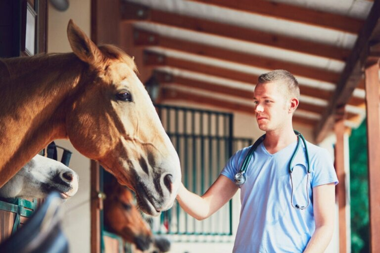 Pythiose bei Pferden: Was ist das?