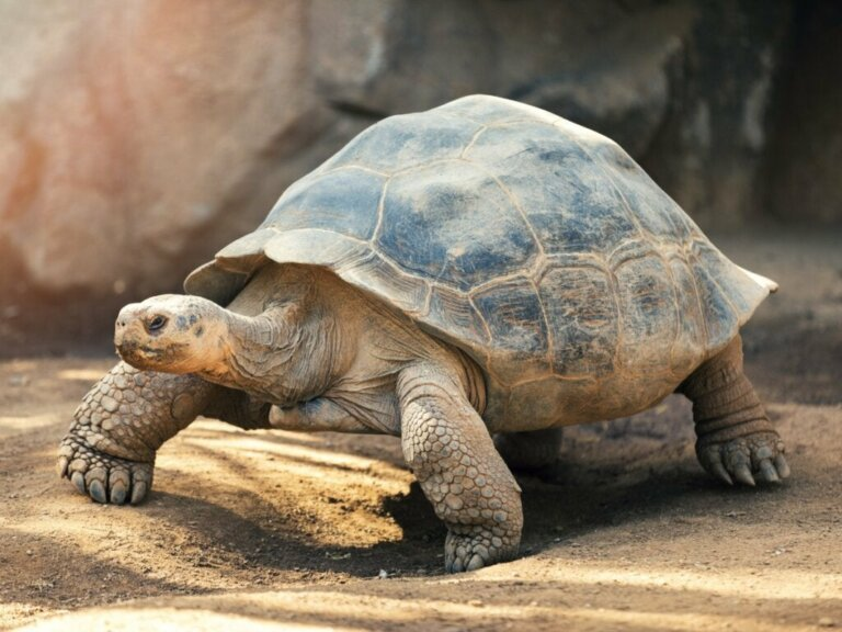 Verhalten von Schildkröten: Wissenswertes über Land-, Wasser- und Meeresschildkröten