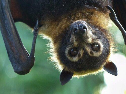Fledermäuse: Wissenswertes über die verschiedenen Arten