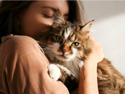 Sind Katzen eifersüchtig? Alles Wissenswerte