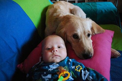 Eine Hündin stillt ein verlassenes Baby