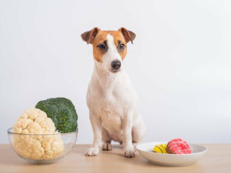 Dürfen Hunde Blumenkohl fressen?