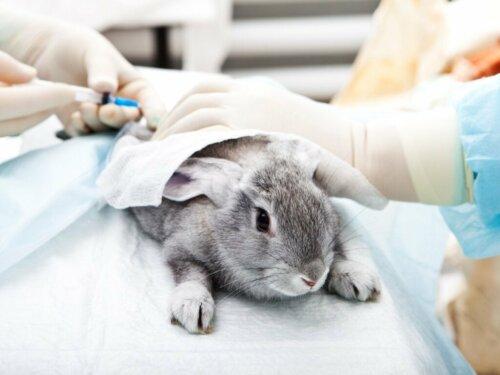 Ivermectin für Kaninchen: Alles, was du darüber wissen solltest