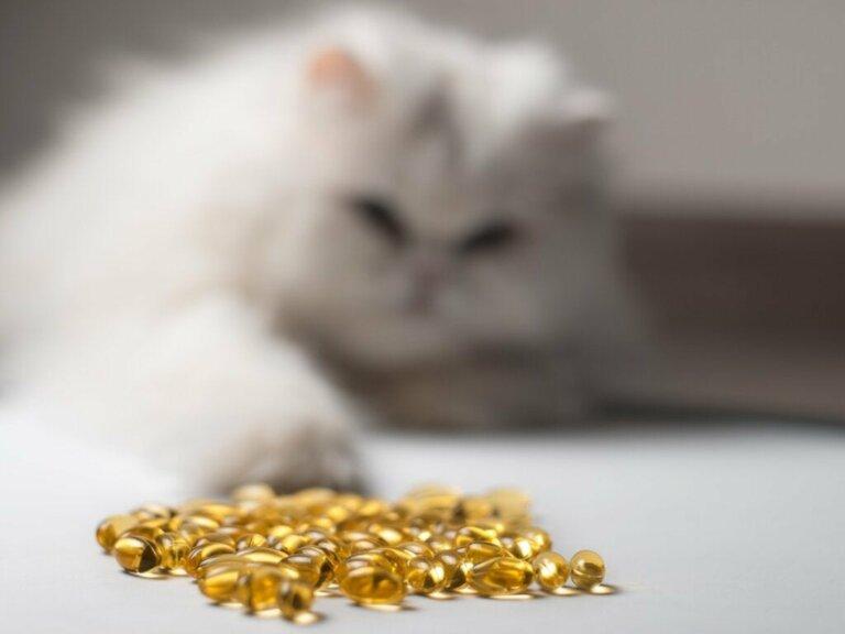 Fischöl für Katzen: 14 Vorteile