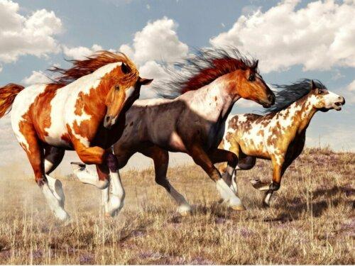 Mustangs: Herkunft und Merkmale dieser Pferderasse