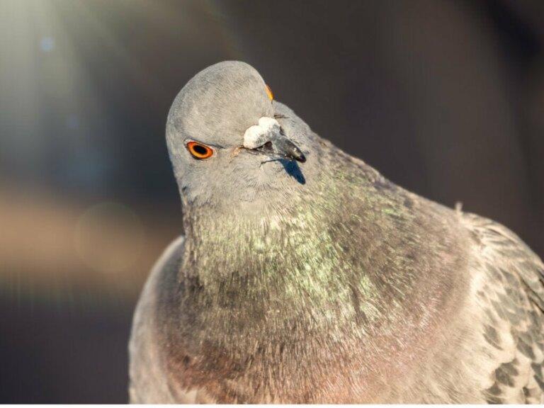 Verhalten von Tauben: Alles Wissenswerte