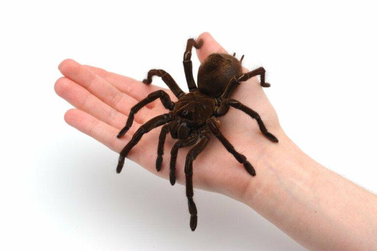 Terrarien für Spinnentiere: Alles, was du wissen musst