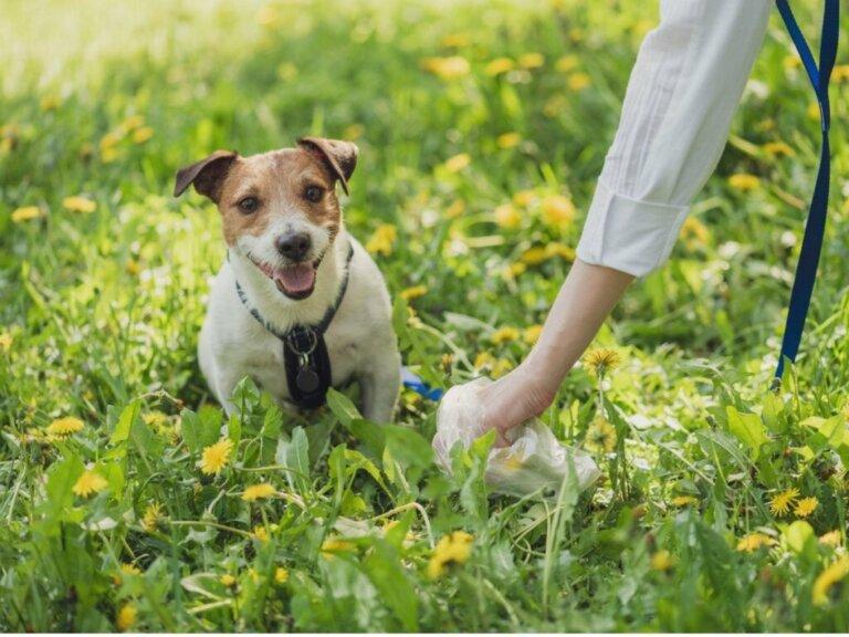 Hundekot: Verschiedene Arten und was sie über die Gesundheit des Tieres aussagen