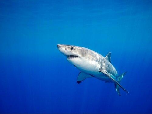 Haie pflegen dauerhafte Beziehungen