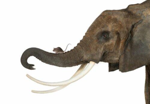 Warum werden die Tiere kleiner? Das sagt die Wissenschaft