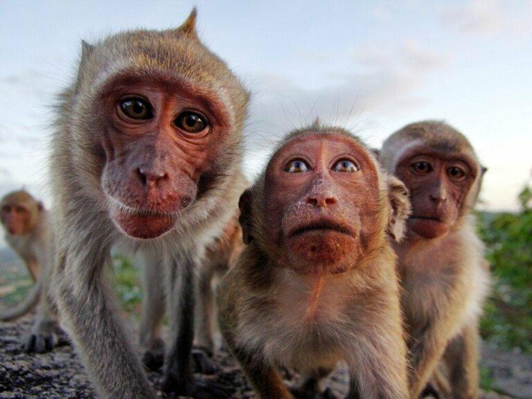 Alles Wissenswerte über das Verhalten von Primaten