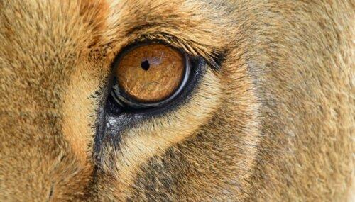 Die 6 Säugetiere mit den am besten entwickelten Sinnen
