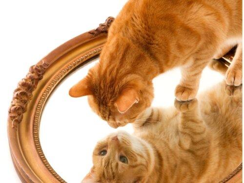 13 orangefarbene Katzenrassen