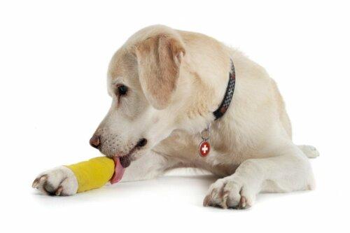 Verstauchungen bei Hunden: Ursachen, Symptome und Behandlung